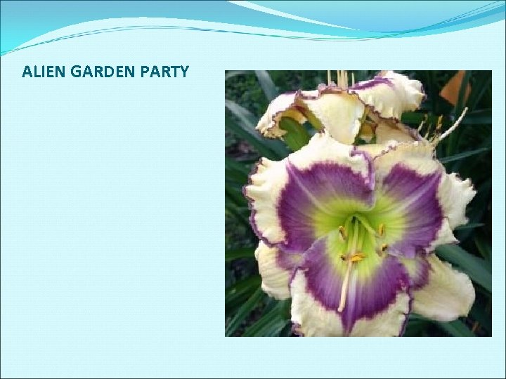 ALIEN GARDEN PARTY