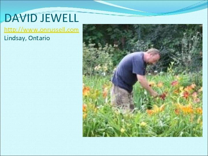DAVID JEWELL http: //www. onrussell. com Lindsay, Ontario