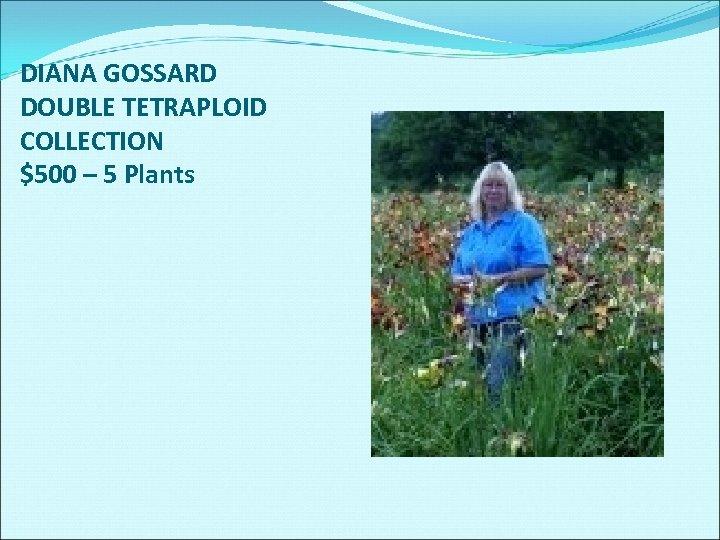 DIANA GOSSARD DOUBLE TETRAPLOID COLLECTION $500 – 5 Plants