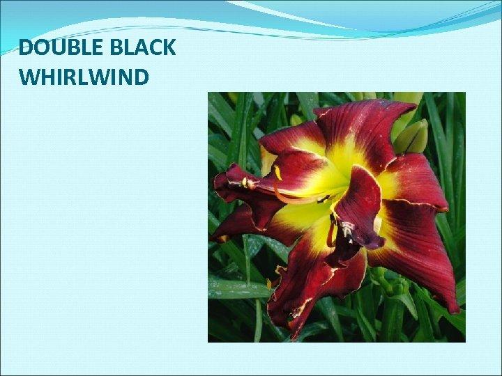 DOUBLE BLACK WHIRLWIND