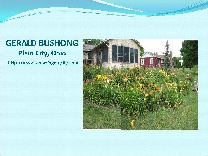 GERALD BUSHONG Plain City, Ohio http: //www. amazingdaylily. com