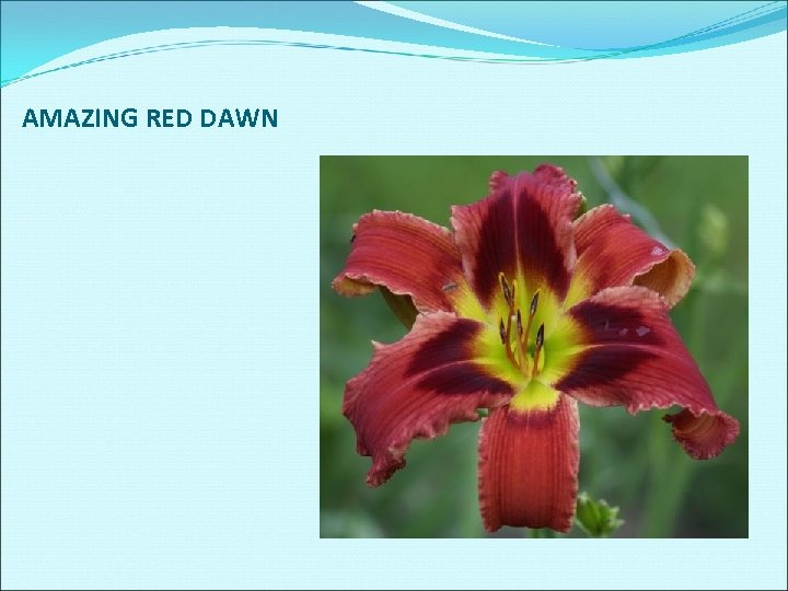 AMAZING RED DAWN