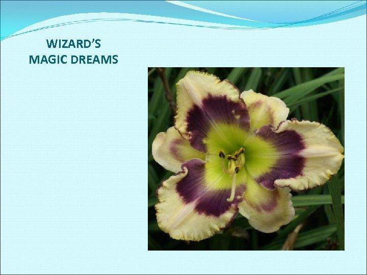 WIZARD'S MAGIC DREAMS