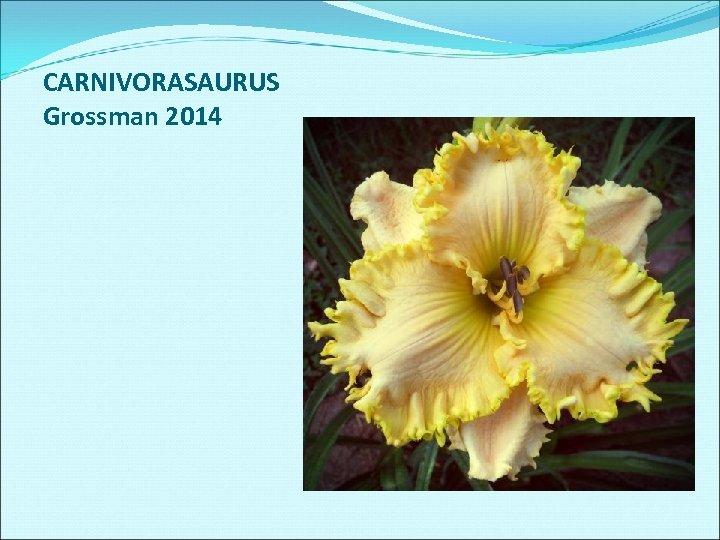 CARNIVORASAURUS Grossman 2014