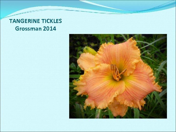 TANGERINE TICKLES Grossman 2014