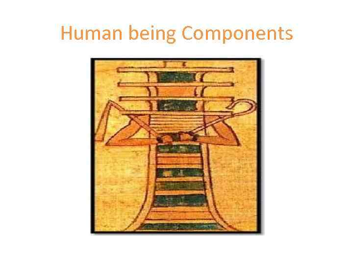 Human being Components
