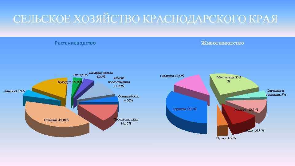СЕЛЬСКОЕ ХОЗЯЙСТВО КРАСНОДАРСКОГО КРАЯ Растениеводство Рис 3, 60% Кукуруза 16, 80% Животноводство Сахарная свекла