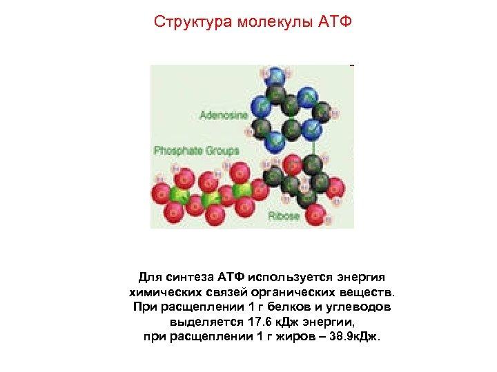 Структура молекулы АТФ Для синтеза АТФ используется энергия химических связей органических веществ. При расщеплении