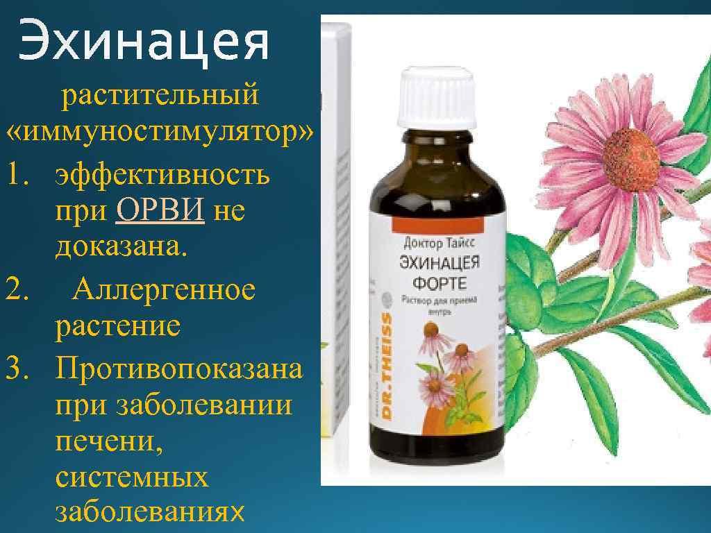 растительный «иммуностимулятор» 1. эффективность при ОРВИ не доказана. 2. Аллергенное растение 3. Противопоказана при