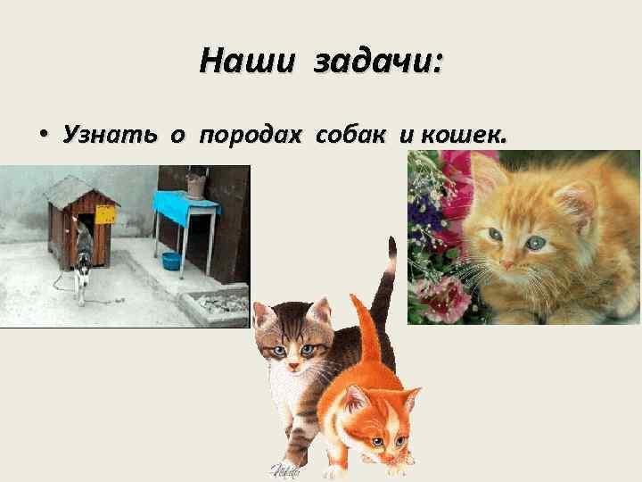 Наши задачи: • Узнать о породах собак и кошек.