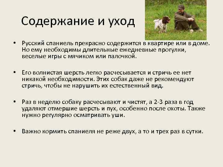 Содержание и уход • Русский спаниель прекрасно содержится в квартире или в доме. Но