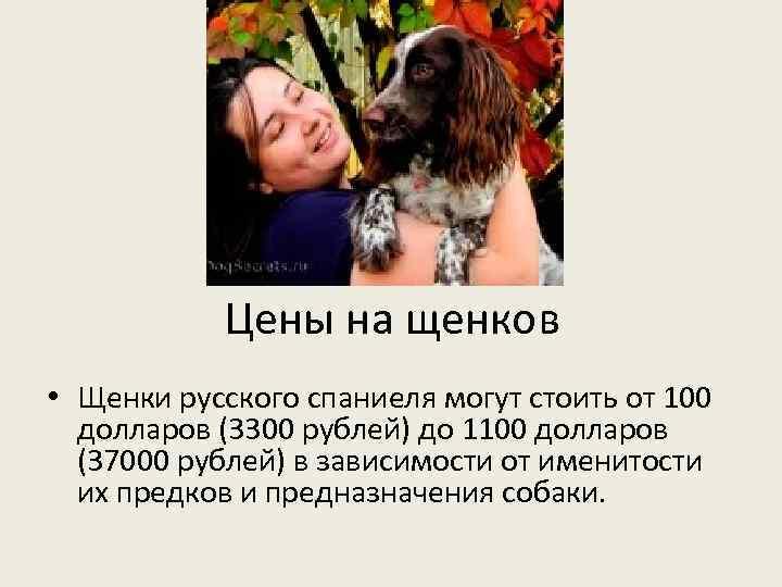 Цены на щенков • Щенки русского спаниеля могут стоить от 100 долларов (3300 рублей)