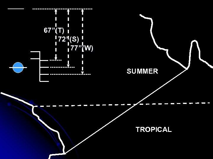 "67""(T) 72""(S) 77""(W) SUMMER TROPICAL"