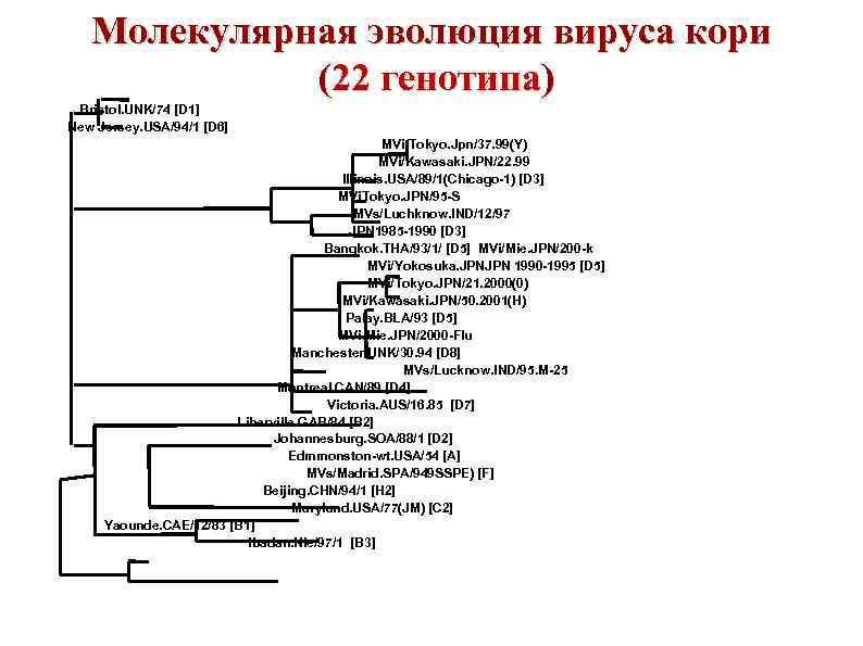 Молекулярная эволюция вируса кори (22 генотипа) Bristol. UNK/74 [D 1] New Jersey. USA/94/1 [D