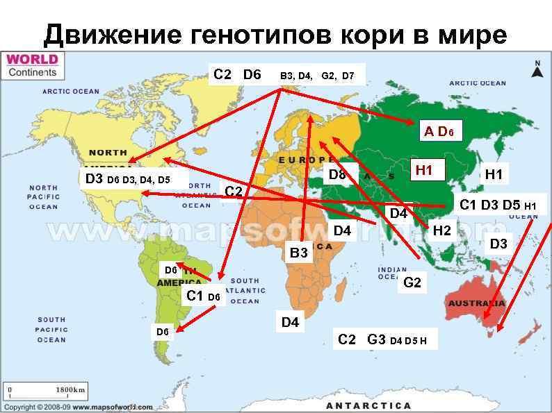 Движение генотипов кори в мире C 2 D 6 B 3, D 4, G
