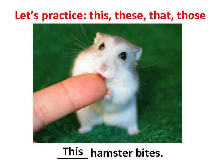 Let's practice: this, these, that, those This _____ hamster bites.