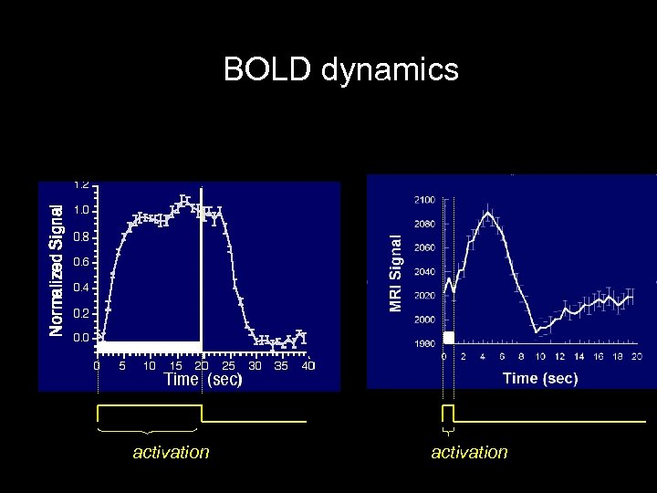 BOLD dynamics activation
