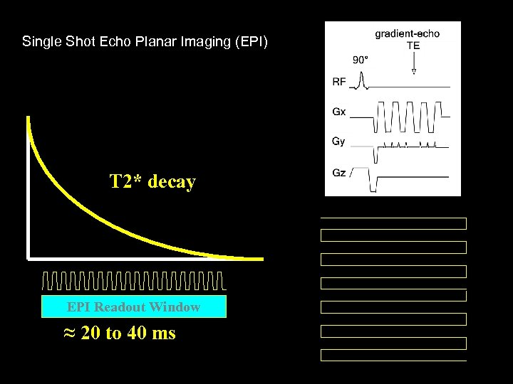 Single Shot Echo Planar Imaging (EPI) T 2* decay EPI Readout Window ≈ 20
