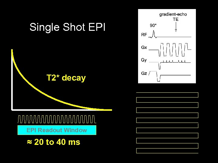 Single Shot EPI T 2* decay EPI Readout Window ≈ 20 to 40 ms