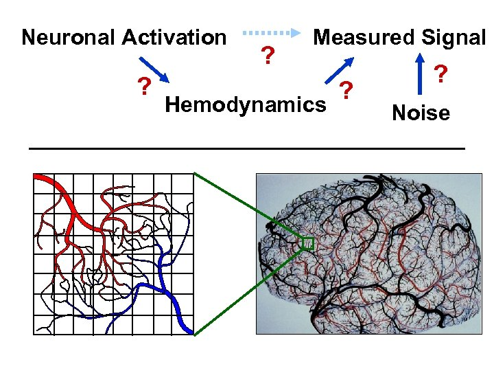 Neuronal Activation ? ? Measured Signal Hemodynamics ? ? Noise