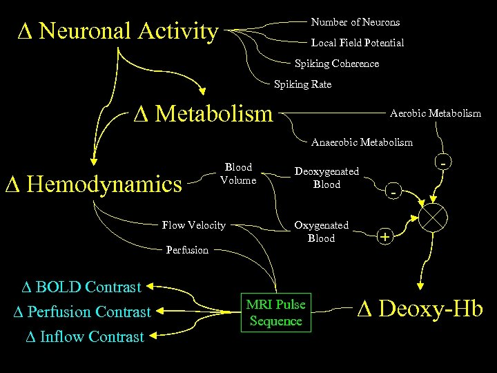 Neuronal Activity Number of Neurons Local Field Potential Spiking Coherence Spiking Rate Metabolism