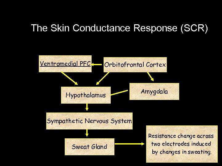 The Skin Conductance Response (SCR) Ventromedial PFC Orbitofrontal Cortex Hypothalamus Amygdala Sympathetic Nervous System