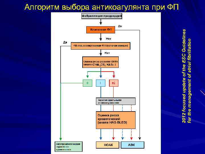2012 focused update of the ESC Guidelines for the management of atrial fibrillation Алгоритм