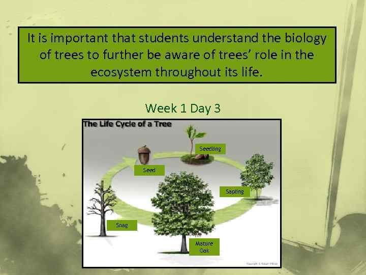 It is important that students understand the biology Lifecycle of Trees of trees to