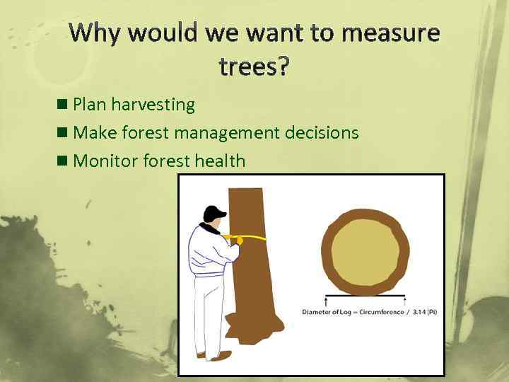Why would we want to measure trees? n Plan harvesting n Make forest management
