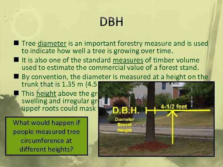 DBH n Tree diameter is an important forestry measure and is used to indicate