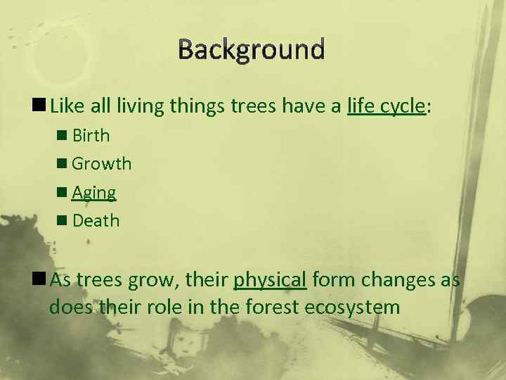 Background n Like all living things trees have a life cycle: n Birth n