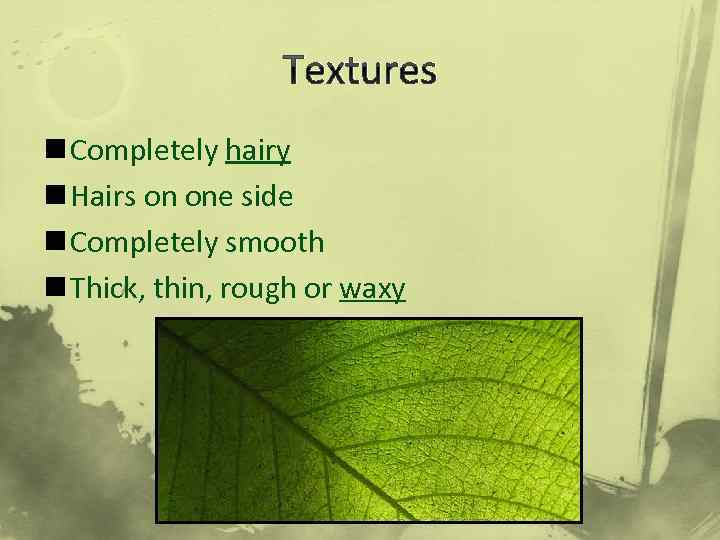 Textures n Completely hairy n Hairs on one side n Completely smooth n Thick,