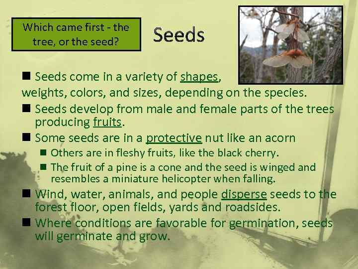 Which came first - the tree, or the seed? Seeds n Seeds come in