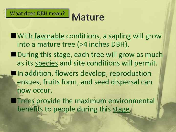 What does DBH mean? Mature n With favorable conditions, a sapling will grow into
