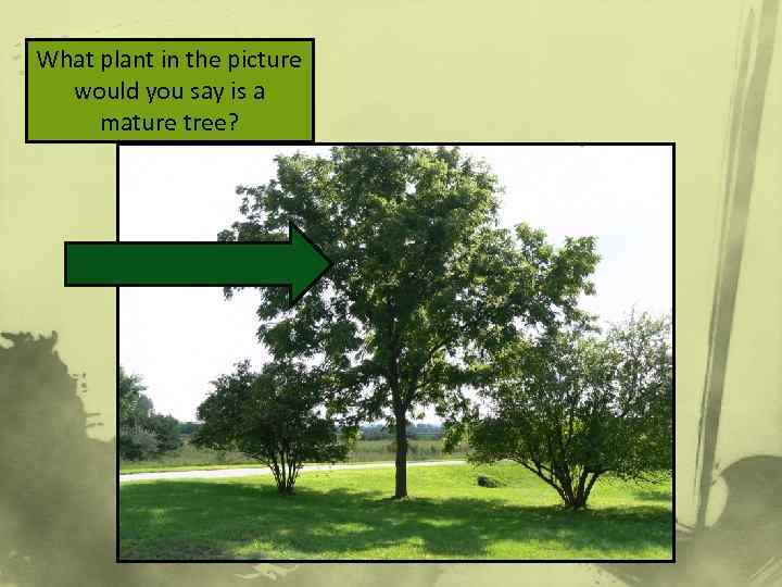 What plant in the picture would you say is a mature tree?