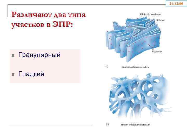 Различают два типа участков в ЭПР: n Гранулярный n Гладкий