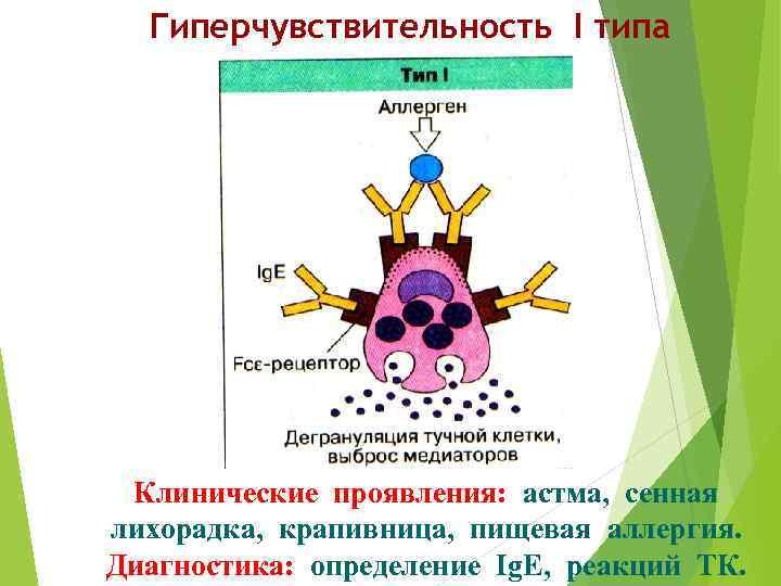 Гиперчувствительность I типа Клинические проявления: астма, сенная лихорадка, крапивница, пищевая аллергия. Диагностика: определение Ig.