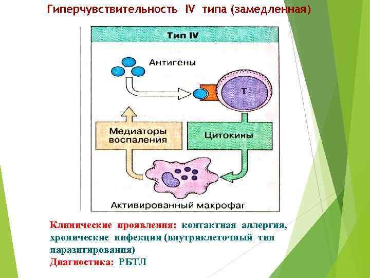Гиперчувствительность IV типа (замедленная) Клинические проявления: контактная аллергия, хронические инфекции (внутриклеточный тип паразитирования) Диагностика: