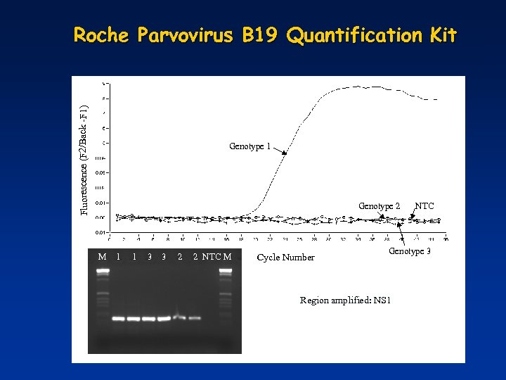 Fluorescence (F 2/Back -F 1) Roche Parvovirus B 19 Quantification Kit Fluorescence (F 1/F