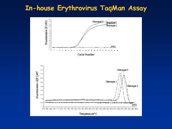 Fluorescence (F 1/F 2) In-house Erythrovirus Taq. Man Assay Genotype 3 Genotype 2 Genotype