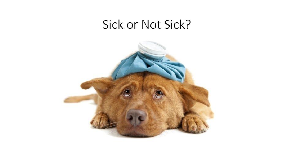 Sick or Not Sick? T 37. 2 HR 120 BP 110/72 RR 24 O
