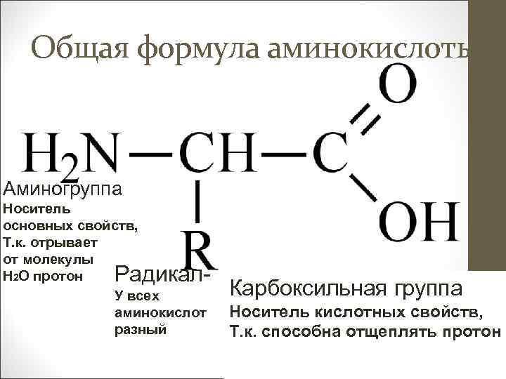 Общая формула аминокислоты Аминогруппа Носитель основных свойств, Т. к. отрывает от молекулы Н 2