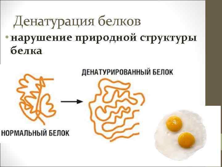 Денатурация белков • нарушение природной структуры белка