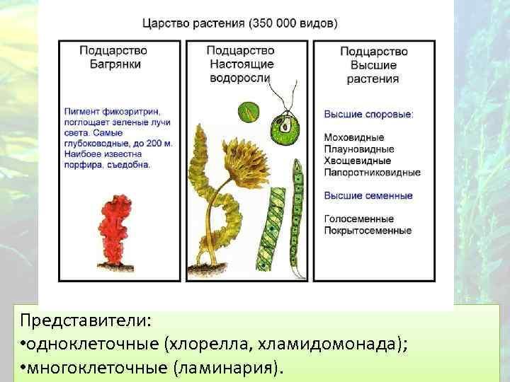 Представители: • одноклеточные (хлорелла, хламидомонада); • многоклеточные (ламинария).