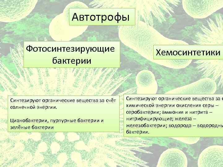 Автотрофы Фотосинтезирующие бактерии Cинтезируют органические вещества за счёт солнечной энергии. Цианобактерии, пурпурные бактерии и