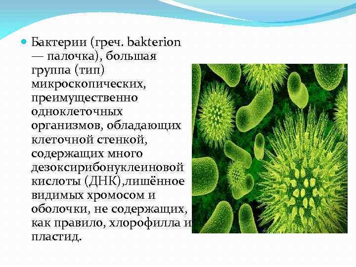 Бактерии (греч. bakterion — палочка), большая группа (тип) микроскопических, преимущественно одноклеточных организмов, обладающих