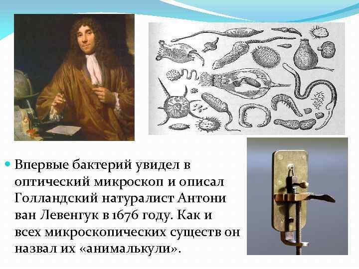 Впервые бактерий увидел в оптический микроскоп и описал Голландский натуралист Антони ван Левенгук