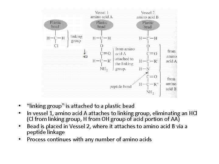 """• """"linking group"""" is attached to a plastic bead • In vessel 1,"""