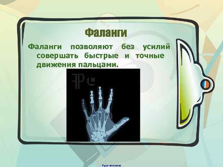 Фаланги позволяют без усилий совершать быстрые и точные движения пальцами. Руки человека