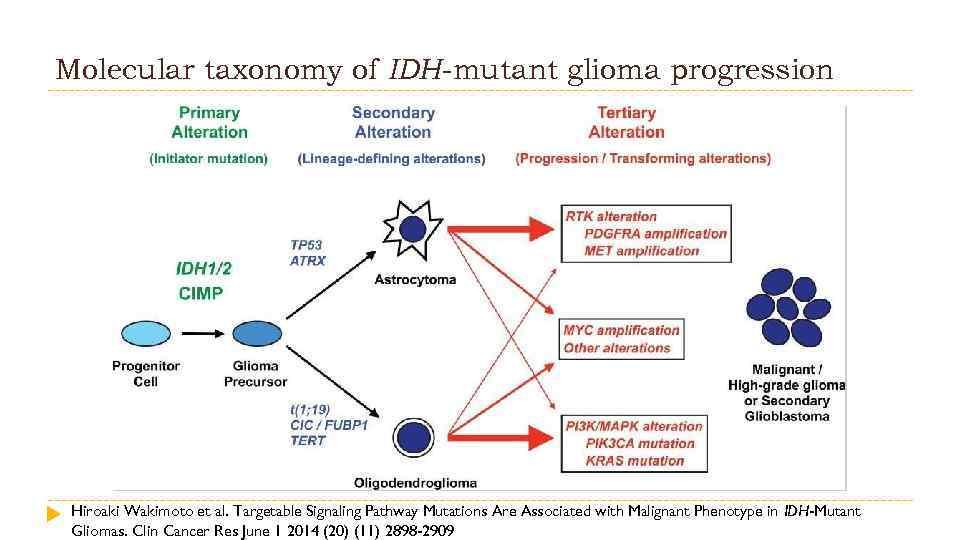 Molecular taxonomy of IDH-mutant glioma progression Hiroaki Wakimoto et al. Targetable Signaling Pathway Mutations